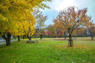 秋色の霞城公園の写真素材 [FYI04730307]