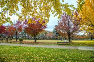 秋色の霞城公園の写真素材 [FYI04730309]