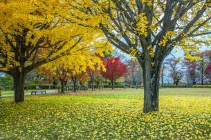 秋色の霞城公園の写真素材 [FYI04730311]
