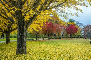 秋色の霞城公園の写真素材 [FYI04730312]