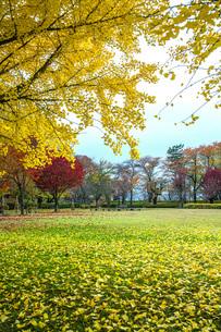 秋色の霞城公園の写真素材 [FYI04730315]