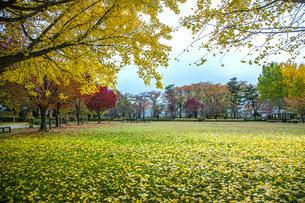 秋色の霞城公園の写真素材 [FYI04730316]