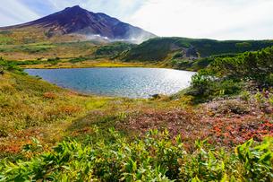紅葉の旭岳姿見の池の写真素材 [FYI04730338]