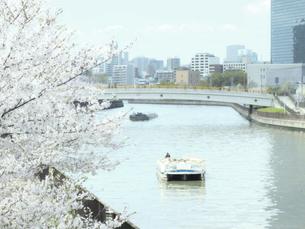 桜と橋と川と船の写真素材 [FYI04730504]