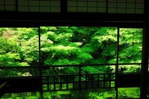 瑠璃光院 京都の写真素材 [FYI04730506]