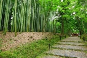 新緑の地蔵院(竹の寺)の写真素材 [FYI04730540]