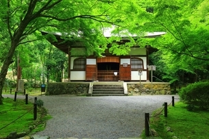 新緑の地蔵院(竹の寺)の写真素材 [FYI04730541]