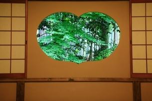 新緑の地蔵院(竹の寺)の写真素材 [FYI04730544]