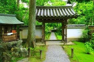 新緑の地蔵院(竹の寺)の写真素材 [FYI04730546]