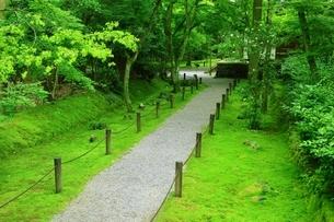 新緑の地蔵院(竹の寺)の写真素材 [FYI04730547]