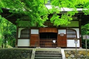新緑の地蔵院(竹の寺)の写真素材 [FYI04730548]