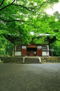 新緑の地蔵院(竹の寺)の写真素材 [FYI04730549]