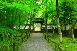 新緑の地蔵院(竹の寺)の写真素材 [FYI04730551]
