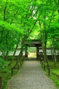 新緑の地蔵院(竹の寺)の写真素材 [FYI04730552]