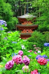 アジサイ咲く岩船寺の写真素材 [FYI04730727]