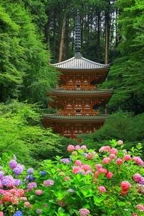 アジサイ咲く岩船寺の写真素材 [FYI04730746]