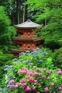 アジサイ咲く岩船寺の写真素材 [FYI04730777]