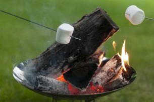 焚き火で焼くマシュマロの写真素材 [FYI04730779]