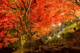 紅葉に覆われる大山寺参道の階段と燈籠の写真素材 [FYI04730894]