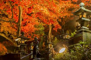 紅葉に覆われる大山寺参道の階段と燈籠の写真素材 [FYI04730895]
