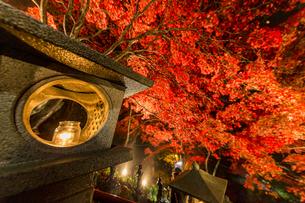 紅葉に覆われる大山寺参道の階段と燈籠の写真素材 [FYI04730899]