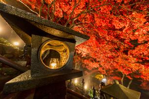 紅葉に覆われる大山寺参道の階段と燈籠の写真素材 [FYI04730900]