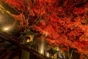 紅葉に覆われる大山寺参道の階段と燈籠の写真素材 [FYI04730901]