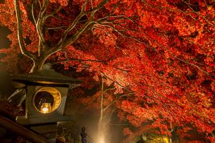 紅葉に覆われる大山寺参道の階段と燈籠の写真素材 [FYI04730902]