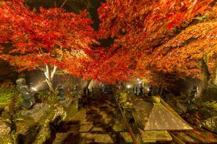 紅葉に覆われる大山寺参道の階段と燈籠の写真素材 [FYI04730906]