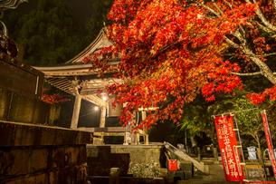 ライトアップされる紅葉と大山寺の鐘楼の写真素材 [FYI04730910]