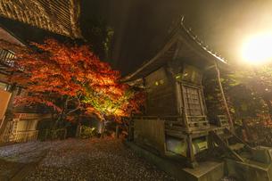 ライトアップされる紅葉と大山寺の大師堂の写真素材 [FYI04730911]