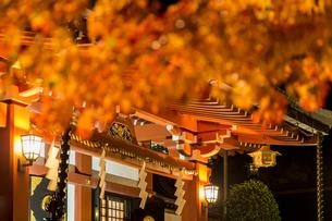 紅葉越しの阿夫利神社の写真素材 [FYI04730912]