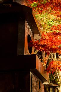 鮮やかな紅葉と神社の燈籠の写真素材 [FYI04730916]