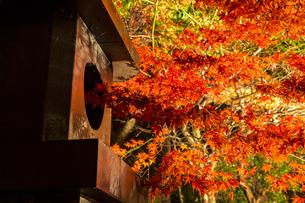 鮮やかな紅葉と神社の燈籠の写真素材 [FYI04730919]