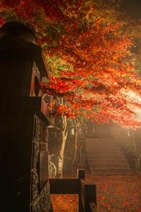 鮮やかな紅葉と神社の燈籠の写真素材 [FYI04730921]