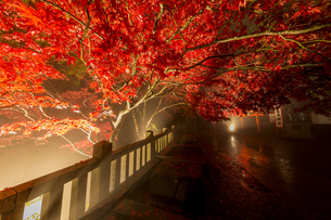 天満宮へ続く紅葉のトンネルの写真素材 [FYI04730927]