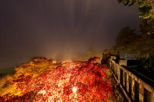 ライトアップされた阿夫利神社の紅い海の写真素材 [FYI04730930]