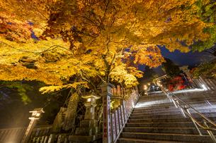 黄金に色づいた阿夫利神社の紅葉の写真素材 [FYI04730932]