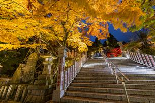 黄金に色づいた阿夫利神社の紅葉の写真素材 [FYI04730933]