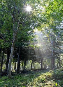 福島県 布引高原 遊歩道の朝の写真素材 [FYI04731139]