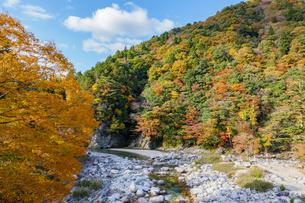 紅葉する山と神崎川の渓流の写真素材 [FYI04731455]