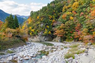 紅葉する山と神崎川の渓流の写真素材 [FYI04731456]