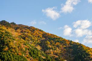 晴天の空と紅葉する山の写真素材 [FYI04731460]
