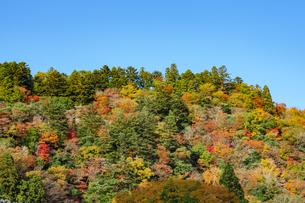 晴天の空と紅葉する山の写真素材 [FYI04731465]