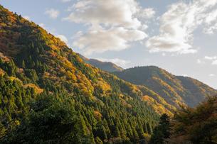 夕日に染まる紅葉する山の写真素材 [FYI04731467]