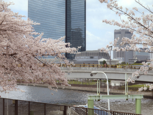 桜とビルと川と橋の写真素材 [FYI04731630]