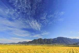 大豆畑の紅葉と独鈷山の写真素材 [FYI04731673]