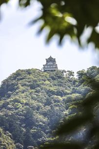 枝葉越しに岐阜城を望むの写真素材 [FYI04731884]