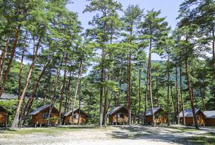 木立の中に建ち並ぶバンガローの写真素材 [FYI04731885]