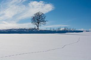 雪原の野生動物の足跡と冬木立の写真素材 [FYI04731959]